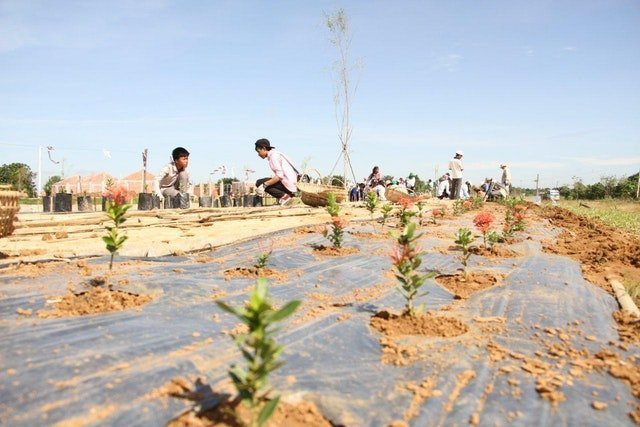 Mabet, gelecek için ekim yapma konusunda çocuk ve gençlere ilham vermektedir - 12