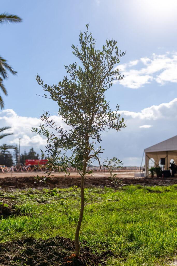 Hz. Abdülbaha'ya ait Makam'ın inşa edileceği alandaki yapılan törende Akka Belediye Başkanı ve Dini Liderler hazır bulunarak saygılarını gösterdiler - 05
